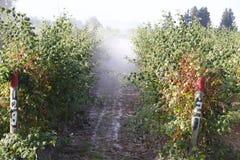 Washington Farmer Sprays Chemicals sur des baies photographie stock libre de droits