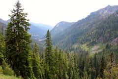Washington Forest royaltyfri foto