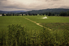 Washington Lush Green Field occidentale immagini stock