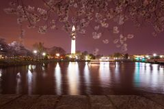 Washington Memorial illuminated at night with cherry blossom blurry by the wind, reflecting in the water of the Tidal Basin royalty free stock images