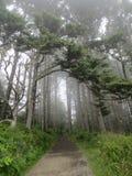 Washington Misty Tree Imagem de Stock