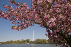Washington Monument Imagenes de archivo