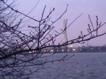 Washington Monument fotos de stock royalty free
