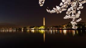 Washington Monument across Tidal Basin during cherry blossom festival, Washington DC. Royalty Free Stock Photography