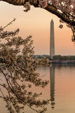 Washington Monument from Across the Tidal Basin at Sunrise during the Cherry Blossom Festival, Washington, DC Stock Image