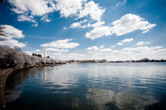 Washington Monument atrás das flores de cerejeira Foto de Stock Royalty Free