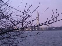The Washington Monument. Behind a tree branch Royalty Free Stock Photos