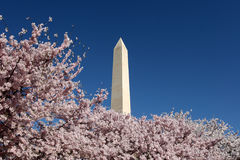 Washington Monument Blossoms Royalty Free Stock Photos