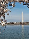 Washington Monument with cherry blossom border royalty free stock photos