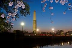 Washington Monument during cherry blossom. Washington Monument at dawn during cherry blossom in Washington DC United States Stock Image