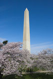 Washington Monument with Cherry Blossom Trees Royalty Free Stock Photo