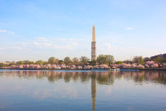 Washington Monument during cherry blossom. View of Washington Monument over the Tidal Basin surrounded by blossoming cherry trees Stock Photography