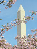 Washington Monument and Cherry Blossoms Stock Photos
