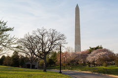 Washington Monument and Cherry Blossoms Stock Photo