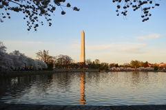 Washington Monument and Cherry Blossoms. This photo was taken in Washington DC. The Washington Monument is an obelisk on the National Mall in Washington, D.C Stock Image