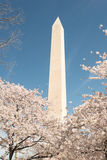 Washington Monument - Cherry Blossoms Stock Photos