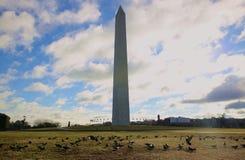 Washington monument. Lovely morning with peaceful birds Stock Photo