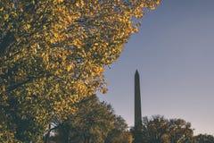 Washington Monument med ett träd i hösten arkivbild