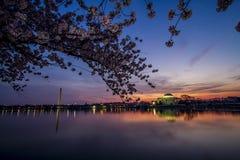 Washington Monument och Jefferson Memorial från över den tidvattens- handfatet på soluppgång under Cherry Blossom Festival Royaltyfri Fotografi