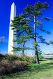 Washington Monument with Pine Tree, USA Royalty Free Stock Photo