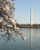 Washington Monument in primavera Fotografia Stock Libera da Diritti
