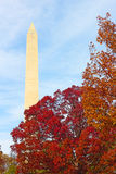 Washington Monument surrounded by trees in autumn foliage. Royalty Free Stock Images