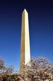 Washington Monument tijdens Cherry Blossom Festival Stock Fotografie