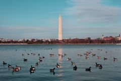 Washington Monument, USA Royalty Free Stock Image