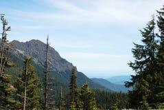 Washington Mountain Valley Fotografering för Bildbyråer