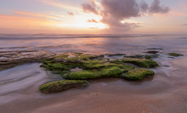 Washington Oaks Sunrise Royaltyfri Bild