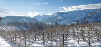 Washington Orchards in winter Royalty Free Stock Photos