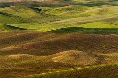 Washington Palouse Stock Foto's