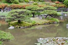 Washington Park Arboretum. Detail of the Japanese Garden with red leaves trees in  Washington Park Arboretum, Seattle. west coast of United States Stock Photo