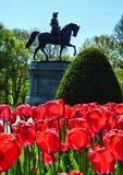 Washington Park in Boston Common. Springtime is a great time to visit Boston Common with tulips and other bulbs in riotous bloom royalty free stock images