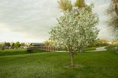Washington Park Path Stock Images