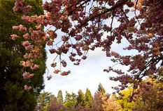 Washington park portland Stock Photography