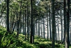 Washington State. Washington - Pimeval Forest Of Cape Flattery On The Olympic Peninsula Stock Image