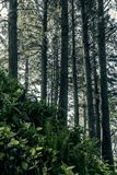 Washington State. Washington - Pimeval Forest Of Cape Flattery On The Olympic Peninsula Royalty Free Stock Photos