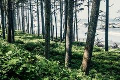 Washington State. Washington - Pimeval Forest Of Cape Flattery On The Olympic Peninsula Royalty Free Stock Photo