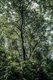 Washington State. Washington - Pimeval Forest Of Cape Flattery On The Olympic Peninsula Royalty Free Stock Image