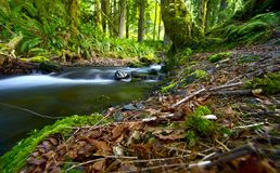Washington Rainforest Stock Image