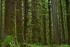 Washington Rainforest Stock Photos
