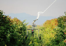Washington Raspberries de irrigation Images libres de droits
