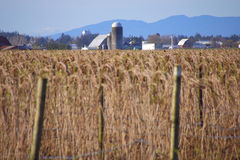 Washington Rural Farm Land Lizenzfreie Stockfotos