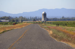 Washington Rural Road and Landscape. A rural road in Washington State is accompanied by farms and berry crops Royalty Free Stock Photo