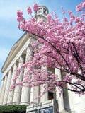Washington Sakura près église presbytérienne en avril 2010 Photographie stock libre de droits
