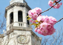 Washington Sakura and Presbyterian Church 2010 Stock Photos
