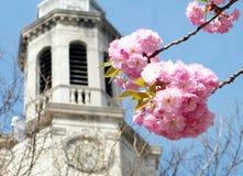 Washington Sakura and Presbyterian Church 2010 Stock Photos