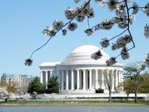 Washington sikt av Cherry Blossoms och Jefferson Memorial 2010 Royaltyfri Foto