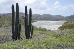 Washington Slagbaai National park, Bonaire Royalty Free Stock Image
